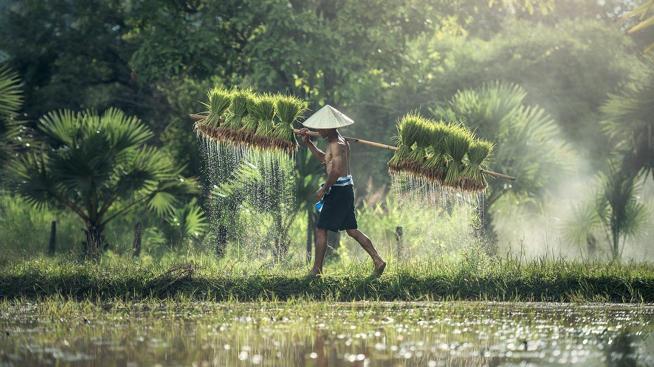 カンボジア株式投資の魅力と注意点 ~おすすめの投資先はどこ?~